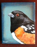 Rufus Sided Towhee Male by TrampLamps