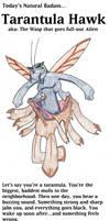 Natural Badass #3 - The Tarantula Hawk!