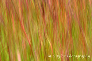 Prairie Impressionism by MTaylorPhotography