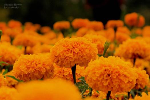 Orange o Flower