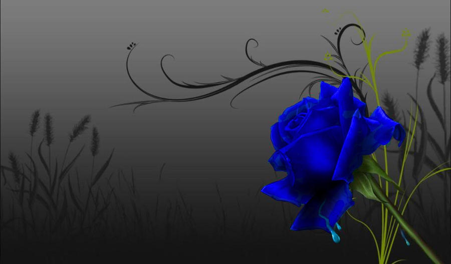 Blue rose wallpaper by kisshugirl101