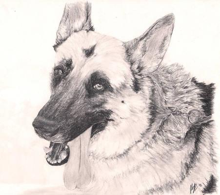 Gunnar Dog