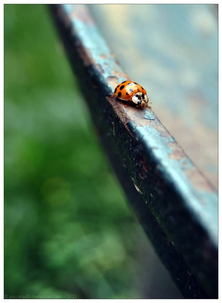 Lady Bug by Arunaudo