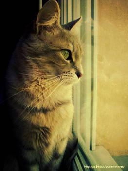Cat looks through the window