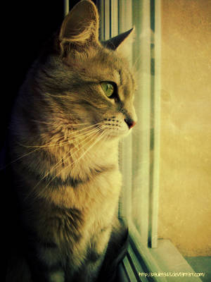 Cat looks through the window by Arunaudo