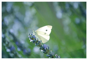 If I was a butterfly... by Arunaudo