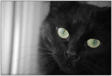 Beautiful Eyes by Arunaudo