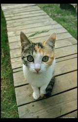 Phenomenal Cat by Arunaudo