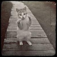 Back away Sir! I know karate!