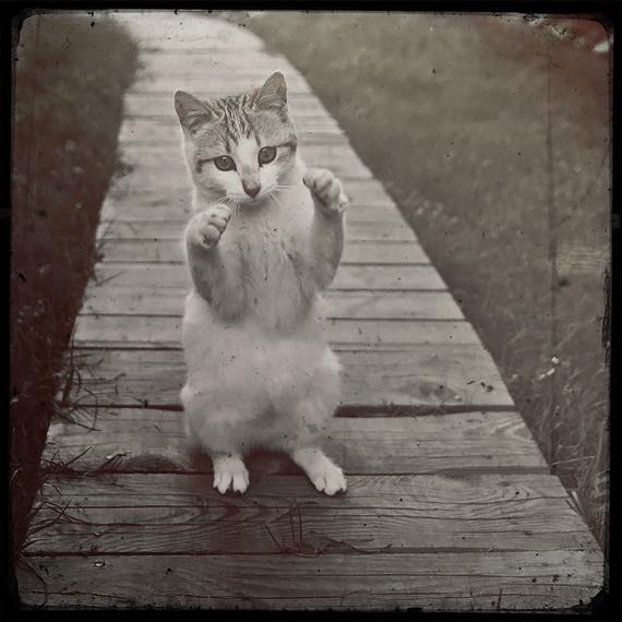 Back away Sir! I know karate! by Arunaudo