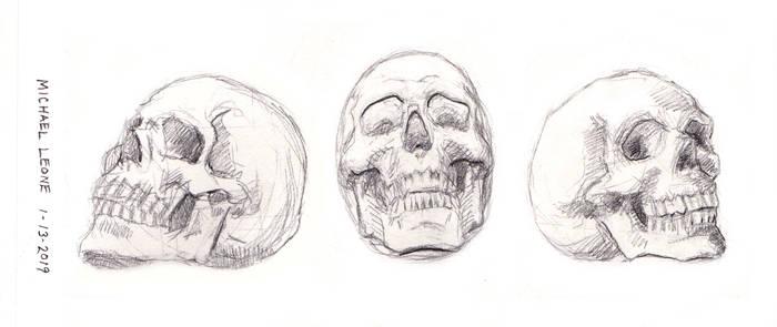 Skulls 1-13-2019 3