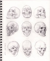 Skulls 1-13-2019
