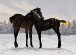 Winter Foals