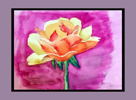 Orange-Rose.2015-05-20