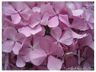 Violet by KikiHood