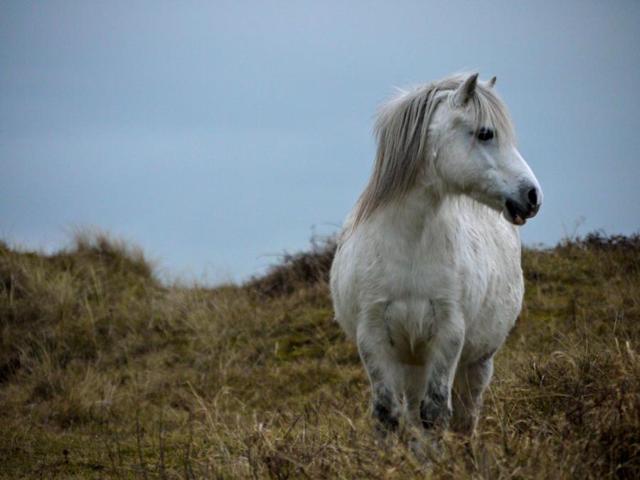 wallpaper horse tonight welshdragon - photo #34
