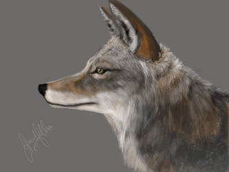 My coyote by NelliesArtWorks