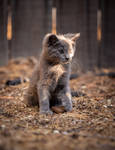 kitten looking