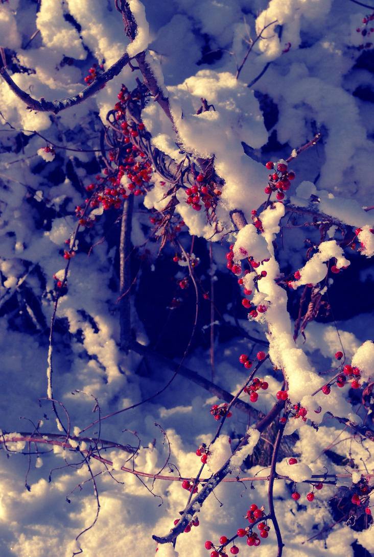 Snowberries 1 by PatchworkPearl