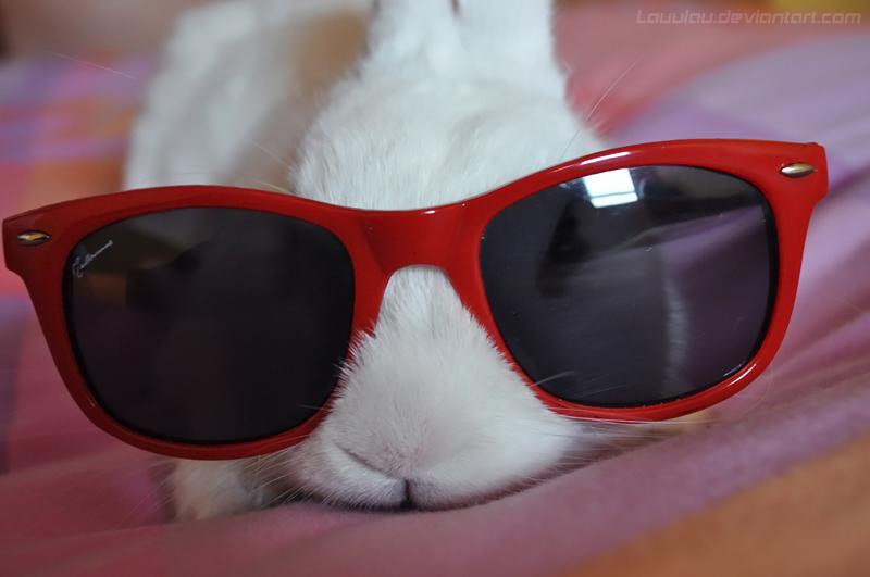 El animal que te hace compañía ~ ♥ Cool_bunny_by_lauulau-d4zyh4k