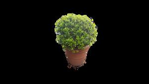 Plant  png by borobudur82