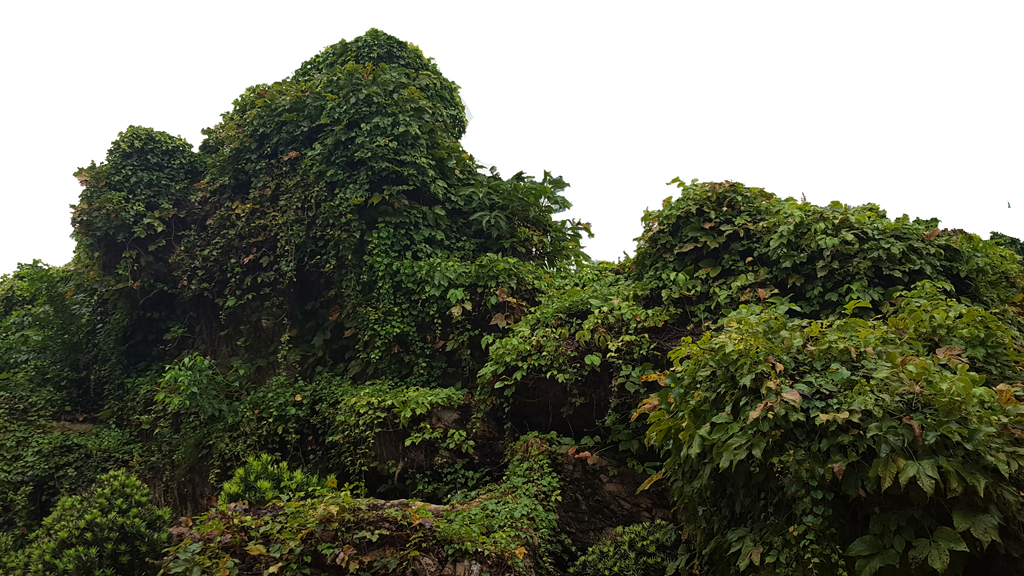 Bush Png by borobudur82