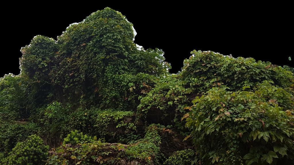 Bush Png by borobudur82
