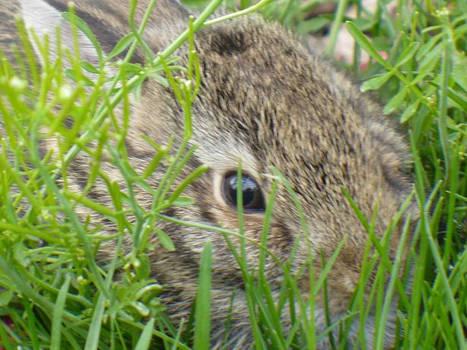 Fuzzy bunneh