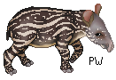 Baby Tapir commission by PhoenixWildfire