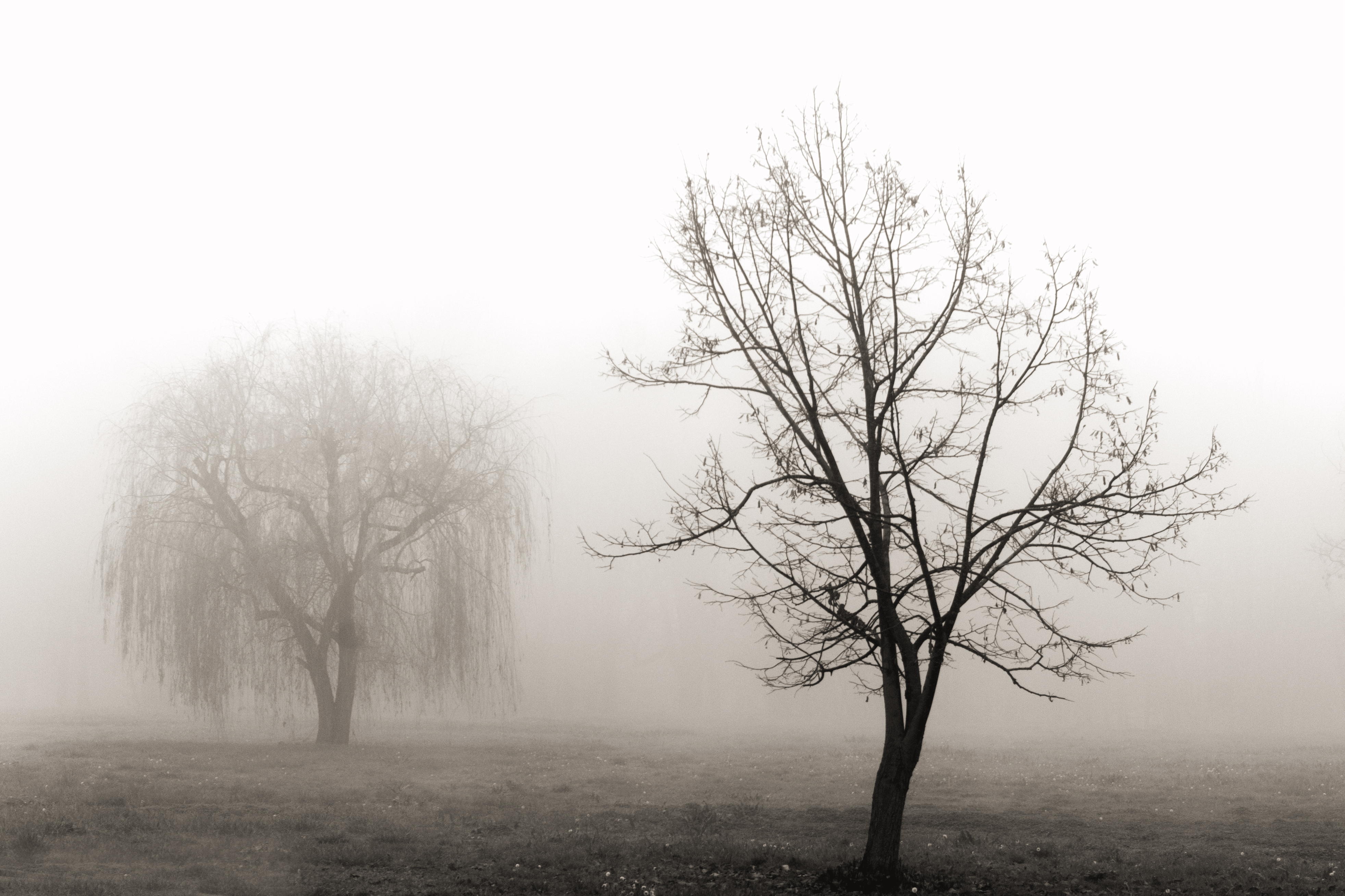 mist by housel1984