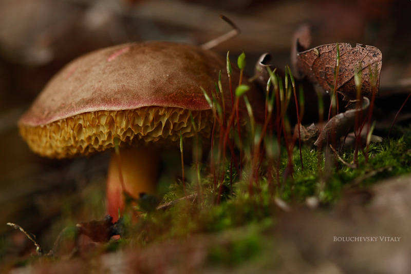 Mushroom and moss... by Viand