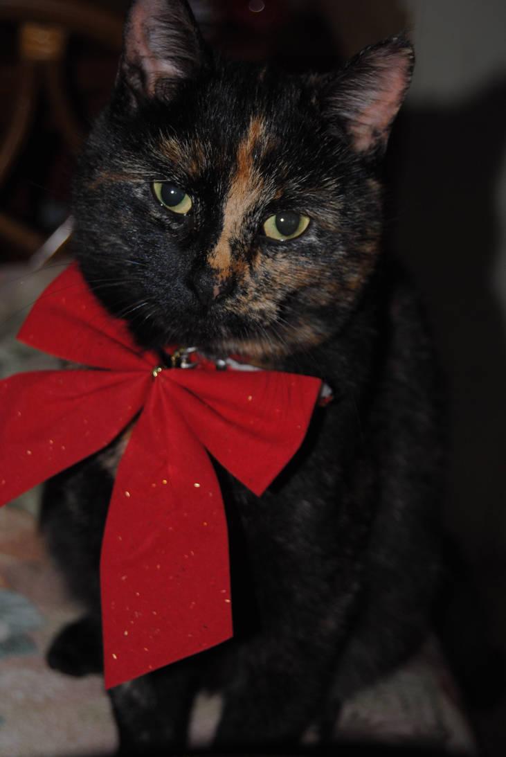 Christmas Kitty by breanna-grace