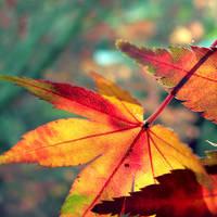 Softly Fall II