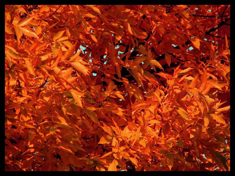-Autumn-
