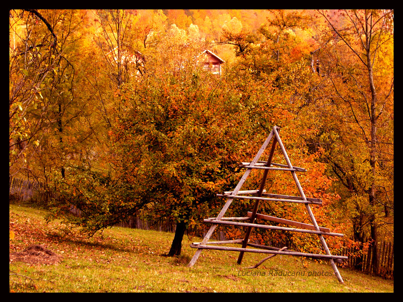 A lot of autumn by Fall-Leaves-Club