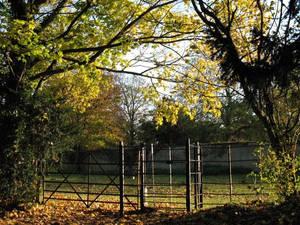 Gate....