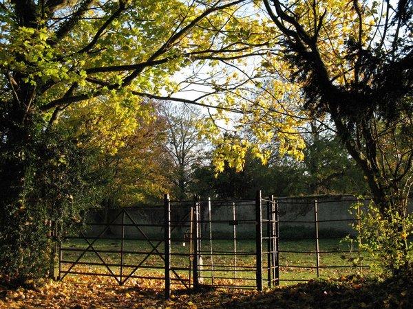 Gate.... by Fall-Leaves-Club