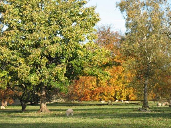 Autumn walk 1 by Fall-Leaves-Club