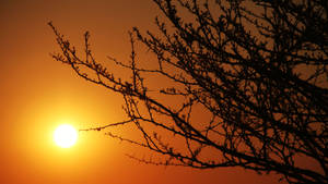Sundowner 01 by ElSpaZo