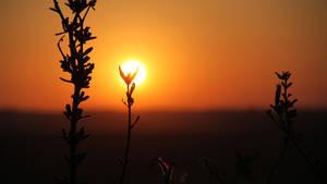 Sundowner 06 by ElSpaZo