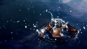 Splash by ElSpaZo