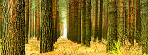 Swazi forest trail