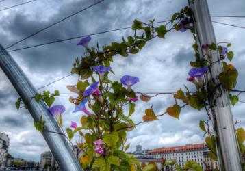 Geneva, bridge detail, morning glory