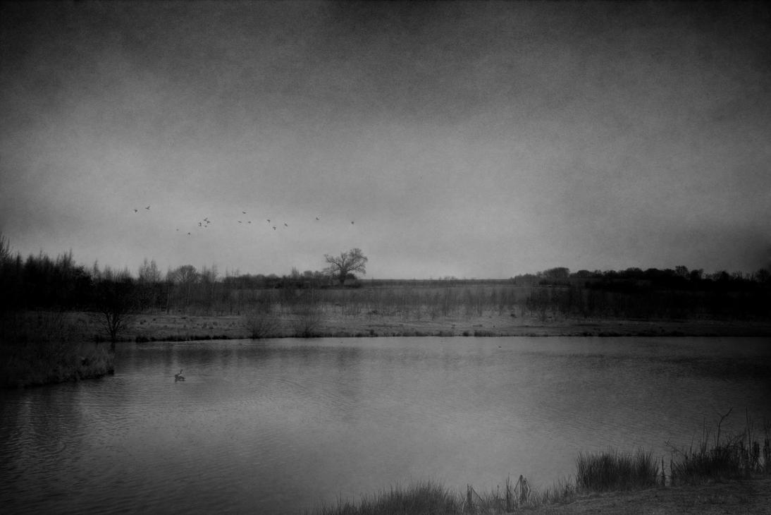 Bird Flight by aglezerman