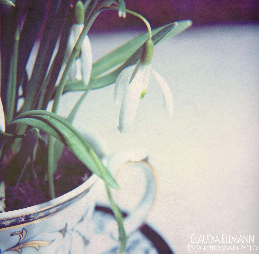 najromanticnija soljica za kafu...caj Spring_tea_by_EShorizon