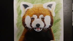 Red pandas are cute