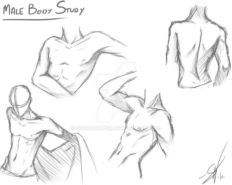 Male Body Study By SoraCooper