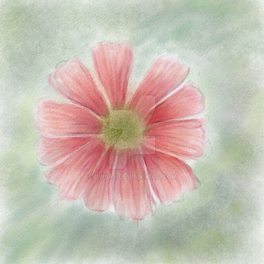 Pink flower by dwsel