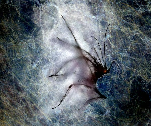 Dark predator moth by dwsel