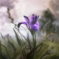 12-08-30 Soft morning by dwsel